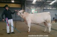Thumbnail of Chenu Ziggy 34 'Junior Champion' @ Dubbo 2016